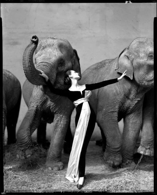 avedon-dovima-with-elephants